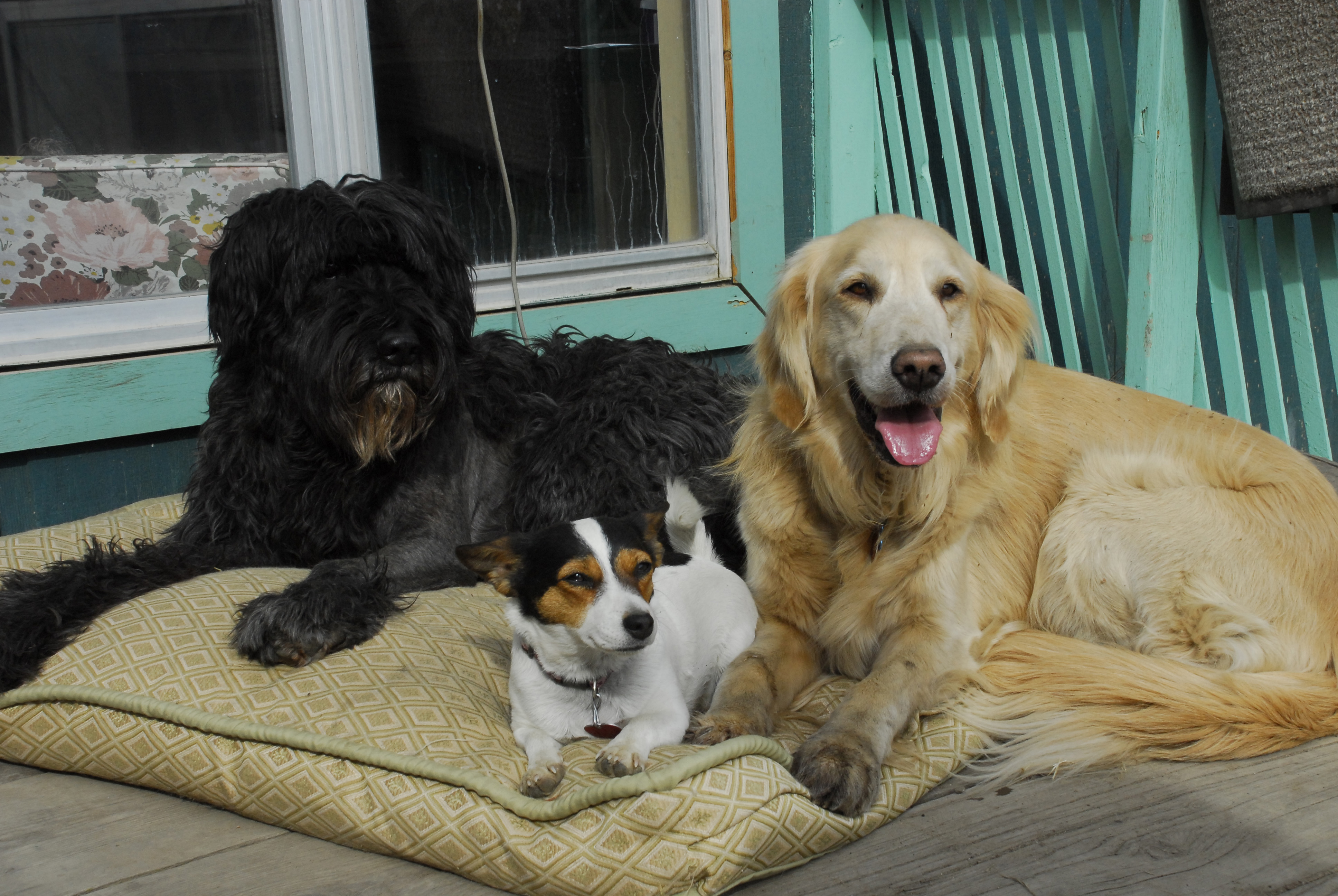 Kidney Failure Is Caused By Old Age Really K9 Well Being