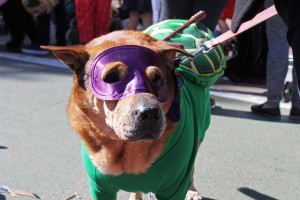 Some dogs may find costumes that restrict vision or mobility to be frightening or stressful.