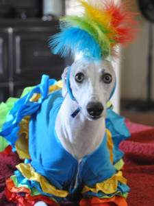 Calypso Dancer Dog -- Image courtesy of Petful